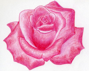 how-to-draw-a-rose32